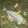 【釣果】グアムで陸からのルアーフィッシング記録