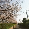 桜と計画の話。