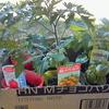 草原ポタジェ化計画 ~トマトを植えよう~