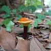 やさしい自然教室「京都御苑のきのこ」