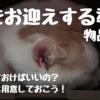 猫をお迎えする準備〜物品篇その1