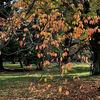 京都御苑に小さな秋を探す