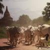 ◆速報◆ ミャンマー観光省が再開計画を発表、8月から国際観光再開へ!