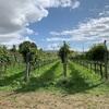 野性、土着、ローカルワインの楽しみ