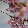 蝶屋「桜の名所」(前編)