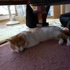 【画像】可愛い猫の寝姿!ペットの天使な姿4選!