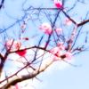 〜春の風景〜|1週間後、さらに春を感じる花の写真