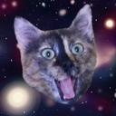 猫を飼えない猫好きによるブログ
