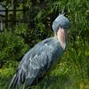 デジタル一眼レフカメラを携えて上野動物園に行ってきたよ!