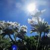太陽に向かって咲く