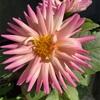3つ目の花🌸