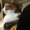 【愛猫日記】毎日アンヌさん#77