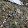 極彩色の美しすぎる虫