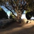 遺跡好きにはもってこい。ギリシャのおすすめ離島 クレタ&コス