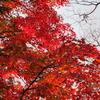Go To トラベル「琵琶湖ぐるっと紅葉10景」