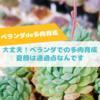 たにログ265 【多肉育成】梅雨〜夏!ベランダの多肉が緑色で可愛くない…育て方が間違ってる?