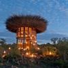 一度行ってみたい、ケニアの'鳥の巣のホテル'