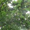 飛騨の飽き景色 『木の実』