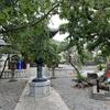 再び鎌倉(本覚寺~妙本寺~常栄寺(ぼたもち寺)~鶴岡八幡宮)その1