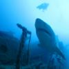 サメ映画【ディープブルー】作品に出てくるアオザメはロボット⁉︎