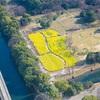 【撮影スポット】東京の菜の花畑なら浜離宮恩賜庭園