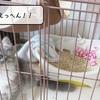 猫雑記 ~むくの巣作り~