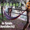 Workaway5軒目!スペイン、アンダルシアでもオリーブを収穫してみた。