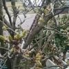 平成最後の4月に雪が降る。