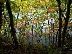 秋の西岡公園を散歩して写真撮影