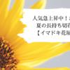 人気急上昇中!おすすめの夏の長持ち切花5選!!【イマドキ花屋が選ぶ】