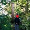 夢の島 植物園