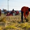 【まいにち15分ブログ 25日目】農業と、毎日のごはんをもっと楽しく。 〜tore tore ダイジェスト vol 1〜