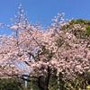 上野を満喫。
