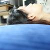 【睡眠の質は人生の質】イイ枕見つけちゃったかも〜
