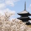 【mixi】ある桜とぼくと10年前のお話