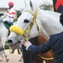 ◆UMAよっしー◆30代で異業種に転職!サラリーマンの競馬予想 ブログ