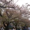 四月十五日(土)の隅田公園、すっかり桜が散っておりました……