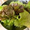 ②葉物野菜1号 収穫〜 水耕栽培