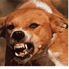 100%死ぬ 狂犬病の恐怖🐕🐈🐀🦇🐺