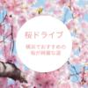 桜を眺めながらドライブ!横浜でおすすめの桜が綺麗な道