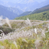 【関西山登り】ススキ野原が美しい岩湧山へ!今が見頃の秋景色をたのしむ【2018年11月】