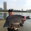 【波止釣り,須磨一文字,チヌ】福田渡船で久しぶりの釣りを満喫