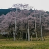 もう桜が咲いているところあるんだって?