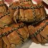 スコーン、酸菜、うなぎ、池袋『老上海 大滬邨(だうつん)』の上海蟹宴会