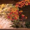 京都の博物館、多彩に事前催し 来秋の国際会議向け