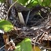 小鳥さんの巣!