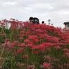 愛知の観光スポット 秋の風物詩!矢勝川堤に咲く300万本の彼岸花(半田市)