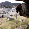 桜とともに人だらけ