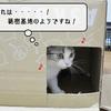 猫の道具 ~ちょっとした工作~