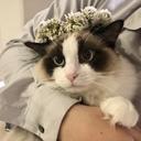 ハクとPoPoの日常〜もふ猫との暮らし/HAKU DIARY〜